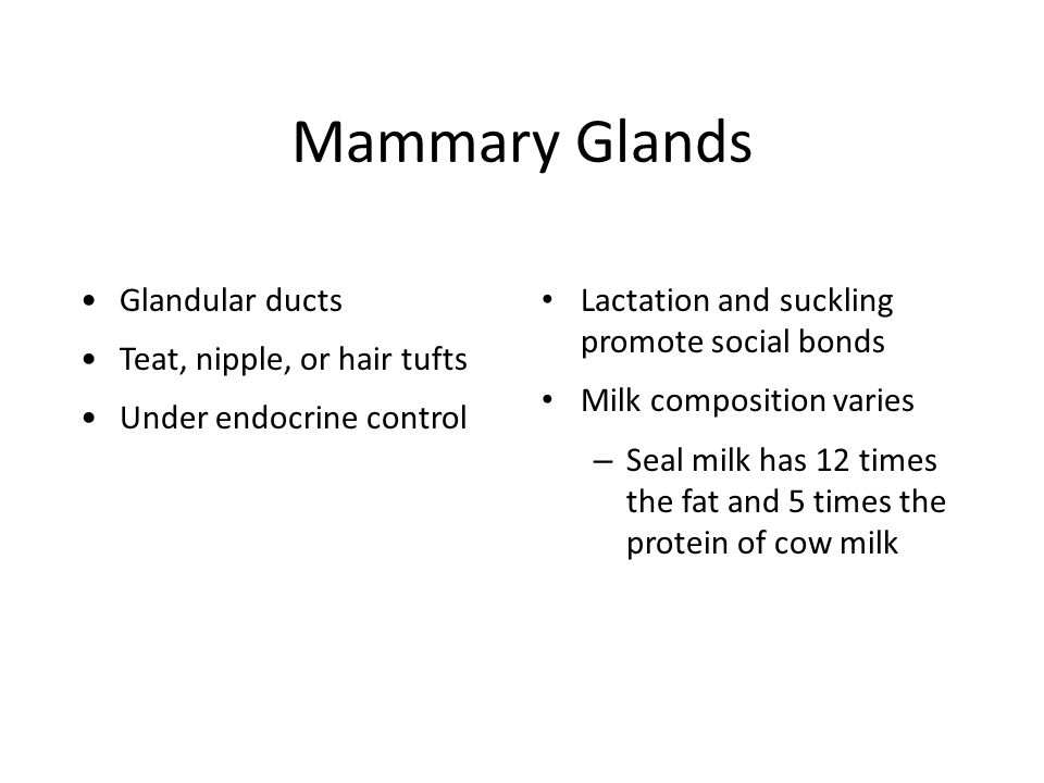 Mammary Glands Glandular ducts Teat, nipple, or hair tufts