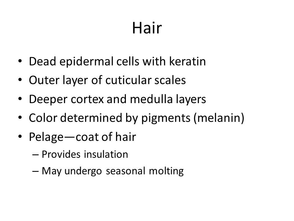 Hair Dead epidermal cells with keratin Outer layer of cuticular scales