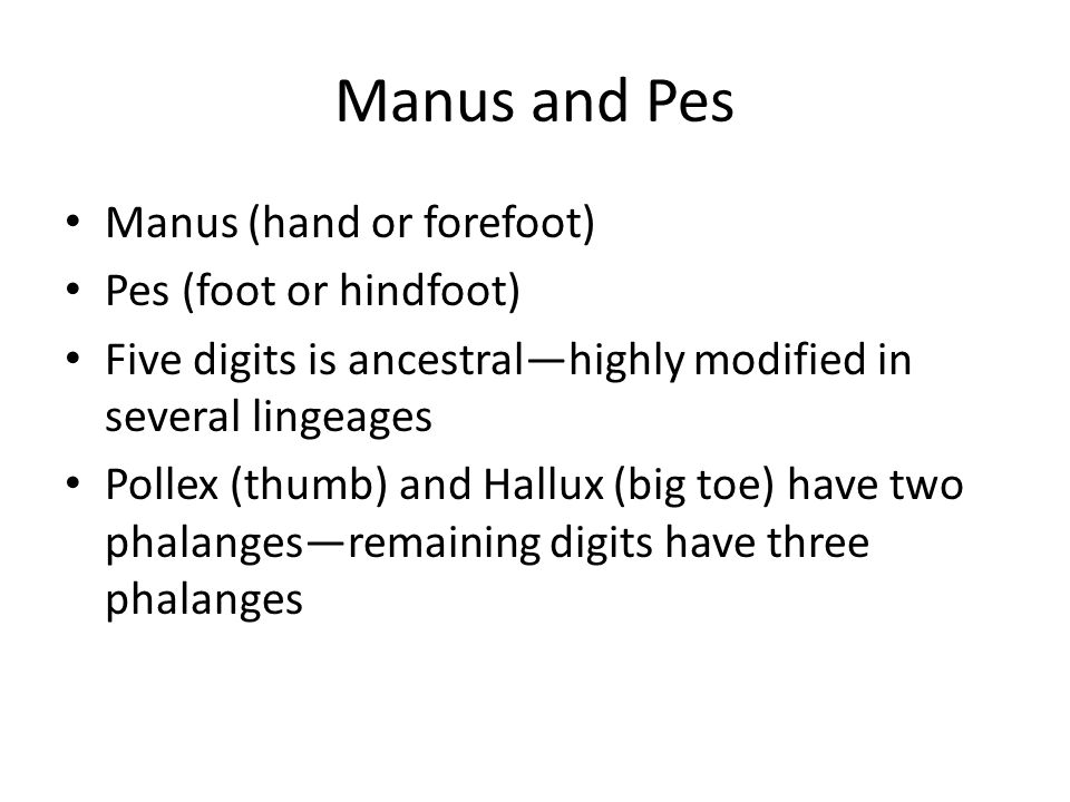 Manus and Pes Manus (hand or forefoot) Pes (foot or hindfoot)