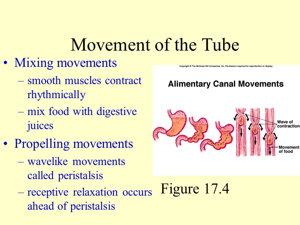 Movement of the Tube Figure 17.4 Mixing movements Propelling movements
