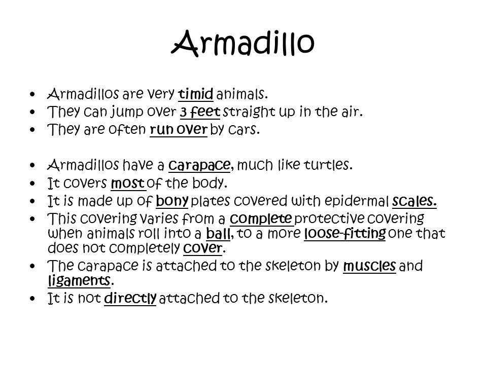 Armadillo Armadillos are very timid animals.