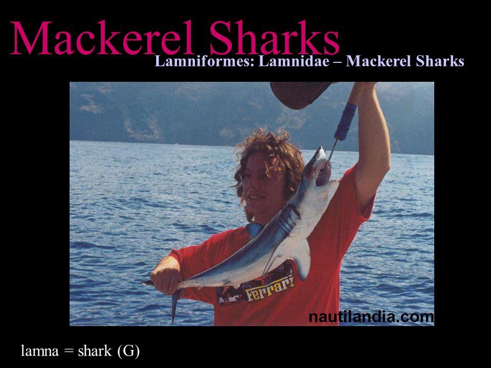 Mackerel Sharks Lamniformes: Lamnidae – Mackerel Sharks