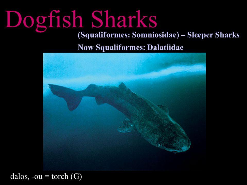 Dogfish Sharks (Squaliformes: Somniosidae) – Sleeper Sharks