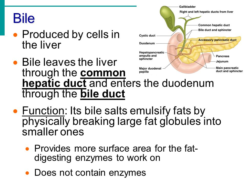 Bile Produced by cells in the liver