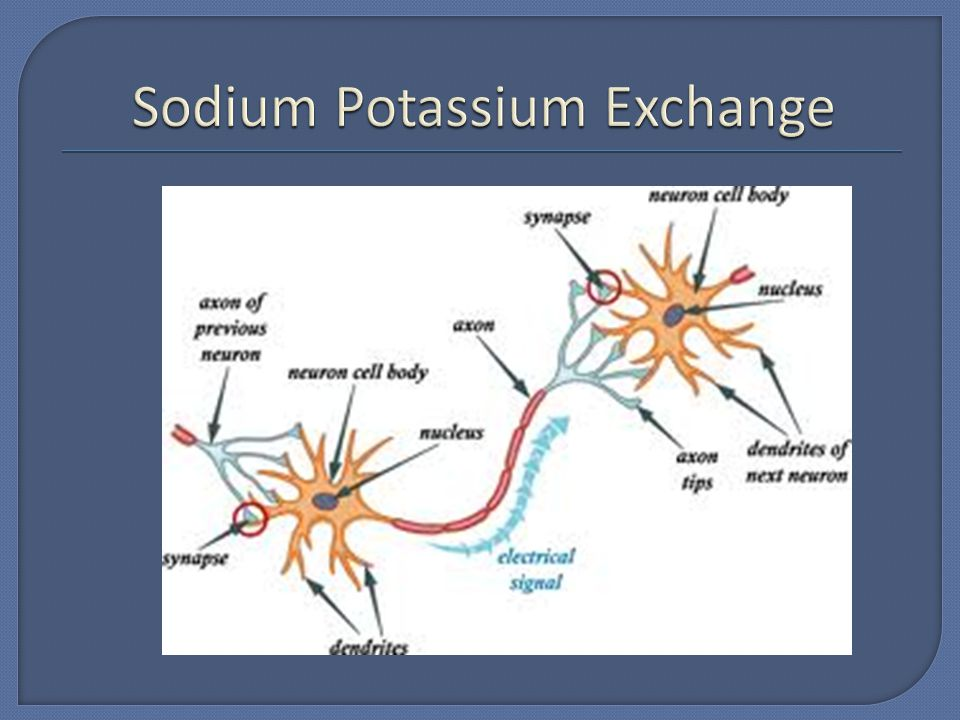 Sodium Potassium Exchange
