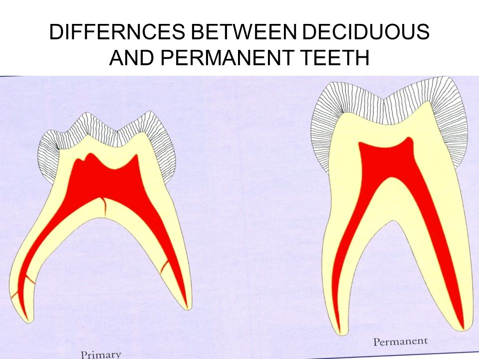 DIFFERNCES BETWEEN DECIDUOUS AND PERMANENT TEETH