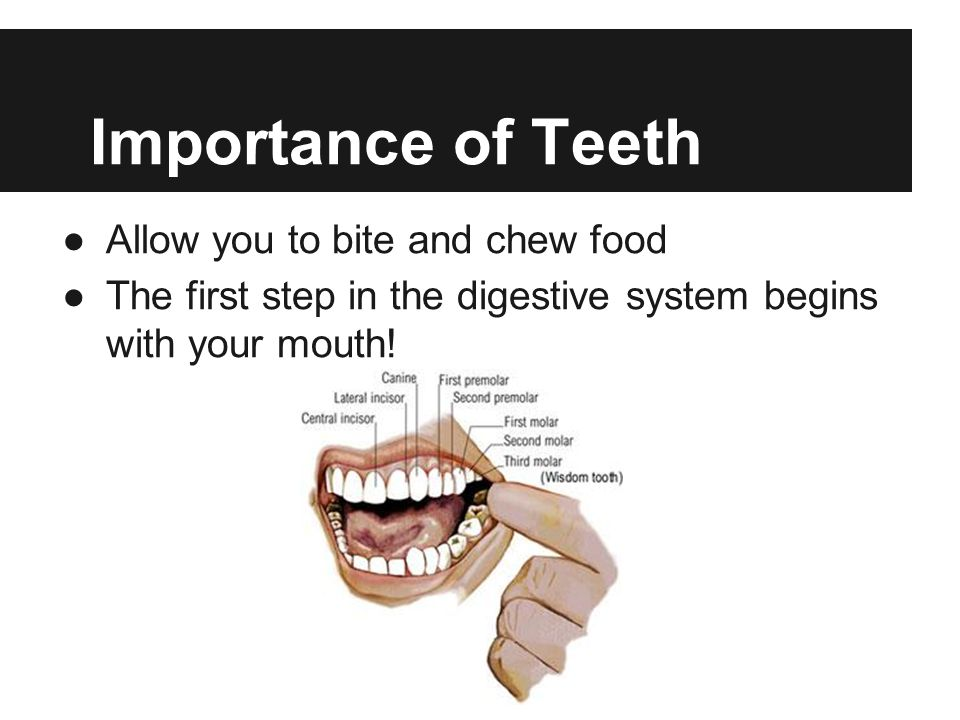 Importance of Teeth Allow you to bite and chew food