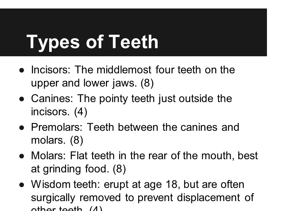 Types of Teeth Incisors: The middlemost four teeth on the upper and lower jaws. (8) Canines: The pointy teeth just outside the incisors. (4)