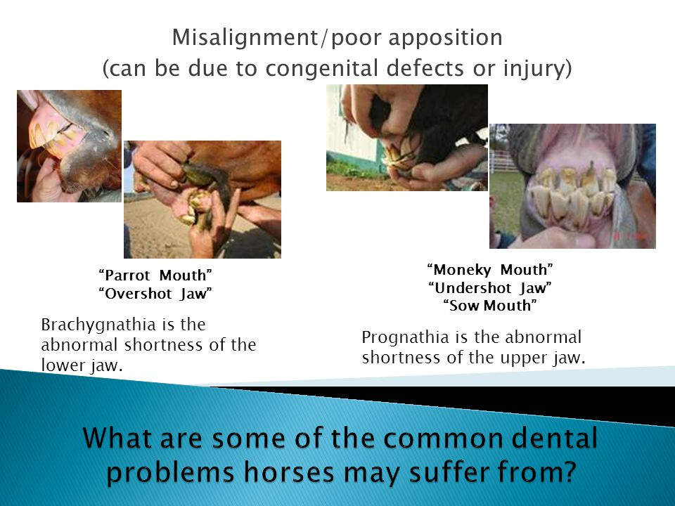 What are some of the common dental problems horses may suffer from