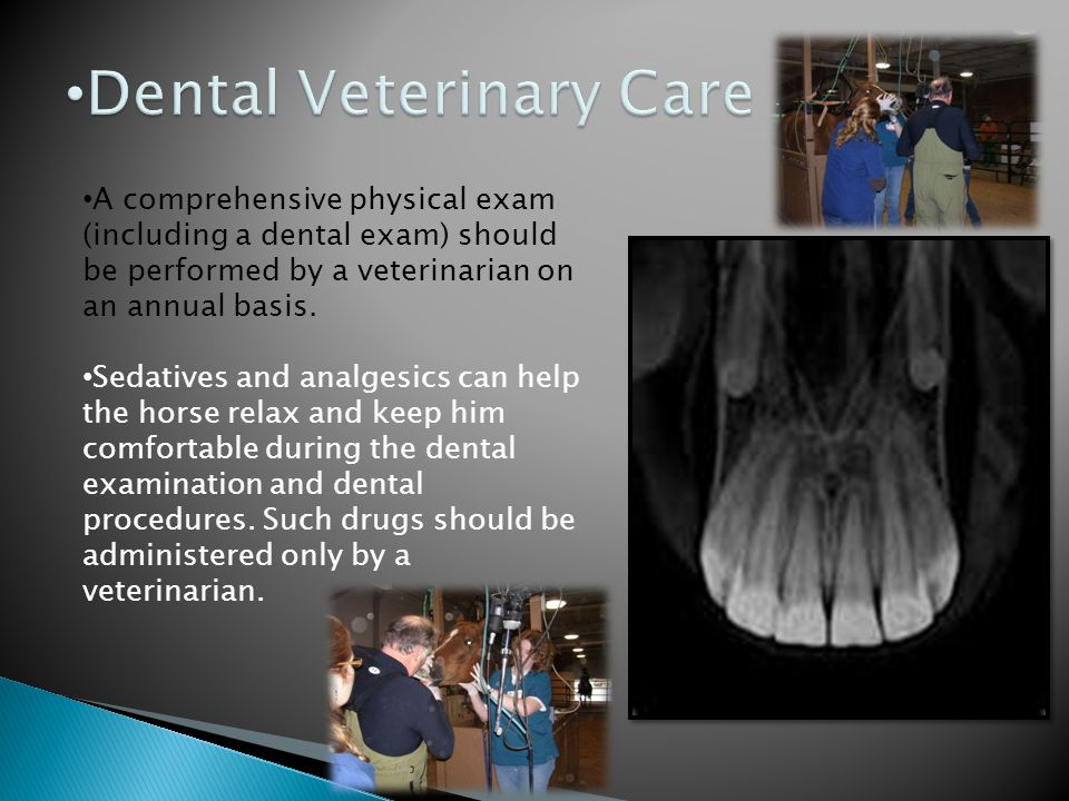 Dental Veterinary Care