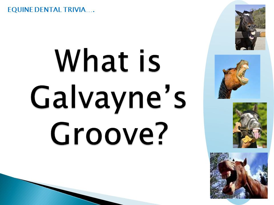 What is Galvayne's Groove