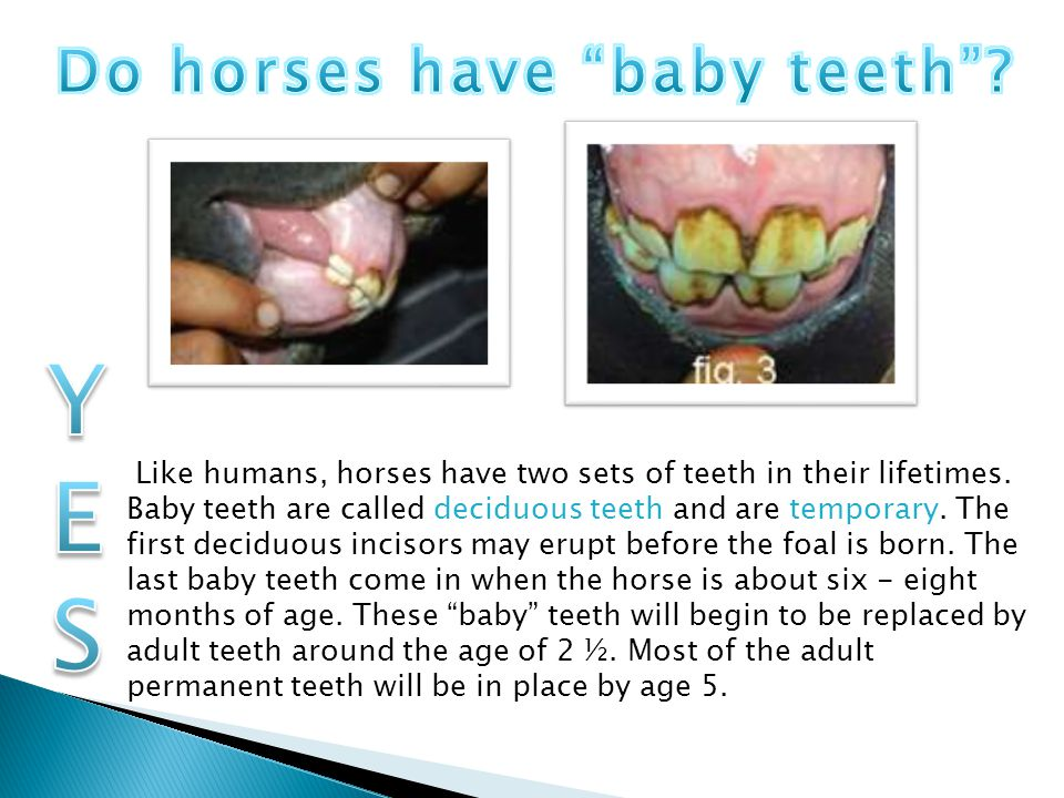 Do horses have baby teeth