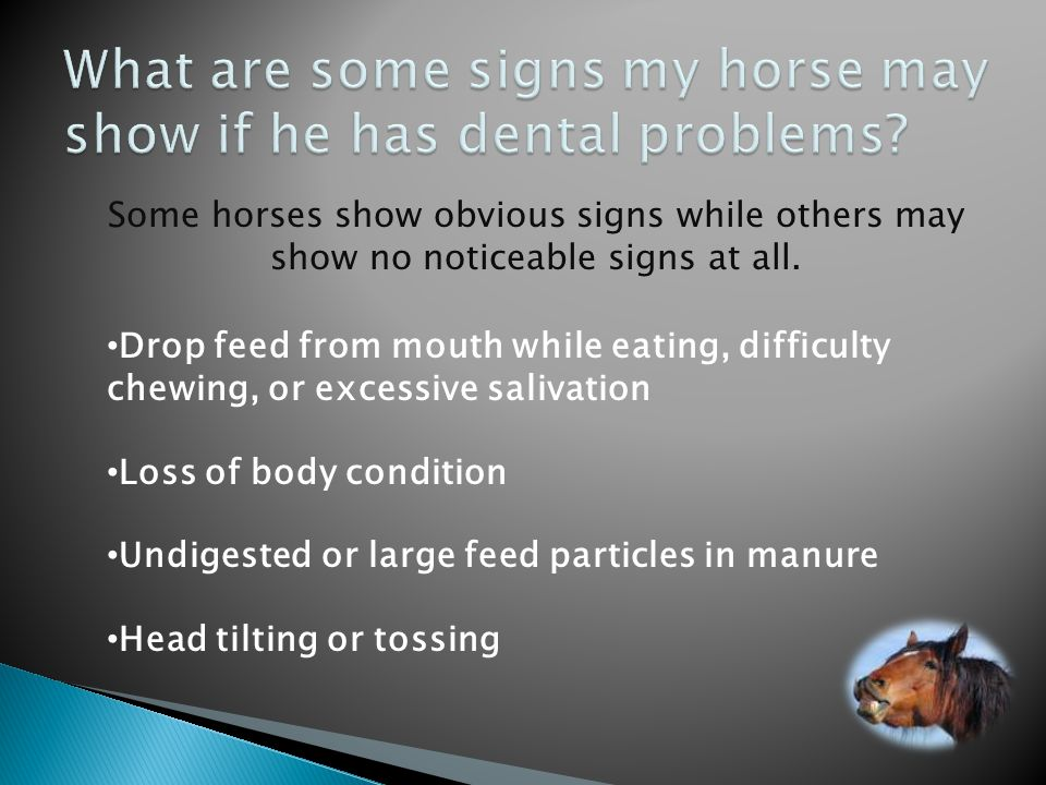 What are some signs my horse may show if he has dental problems