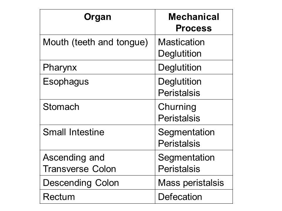 Organ Mechanical Process. Mouth (teeth and tongue) Mastication. Deglutition. Pharynx. Esophagus.