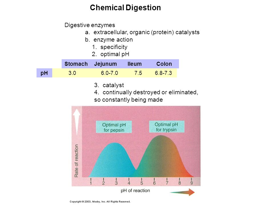 Chemical Digestion Digestive enzymes