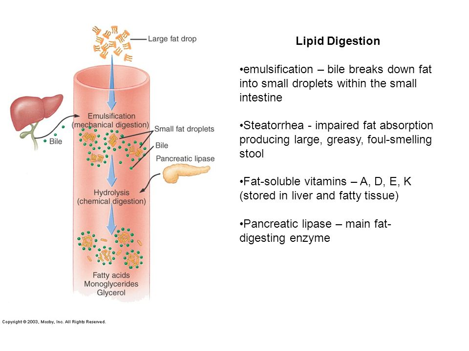 Lipid Digestion emulsification – bile breaks down fat into small droplets within the small intestine.