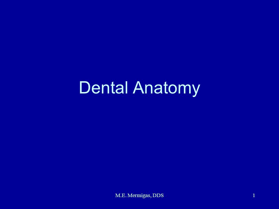 Dental Anatomy M.E. Mermigas, DDS
