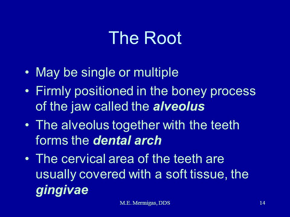 The Root May be single or multiple
