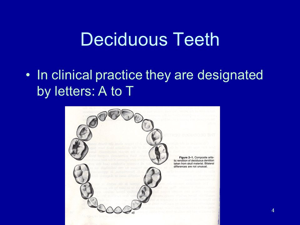 Deciduous Teeth In clinical practice they are designated by letters: A to T M.E. Mermigas, DDS