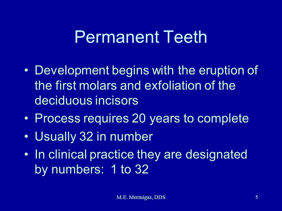 Permanent Teeth Development begins with the eruption of the first molars and exfoliation of the deciduous incisors.