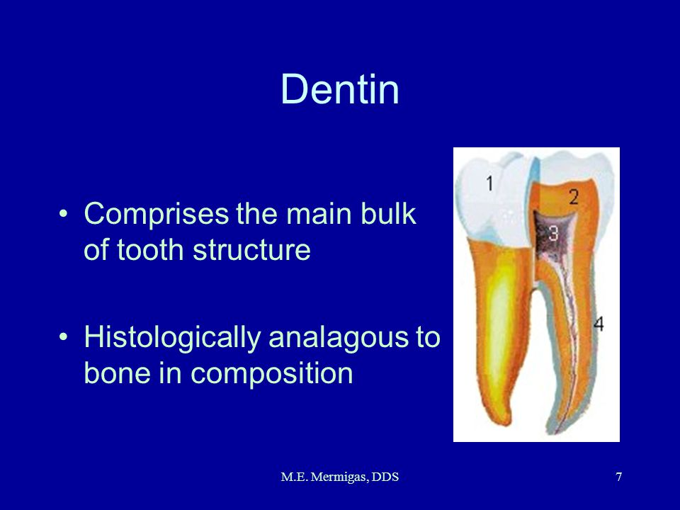 Dentin Comprises the main bulk of tooth structure