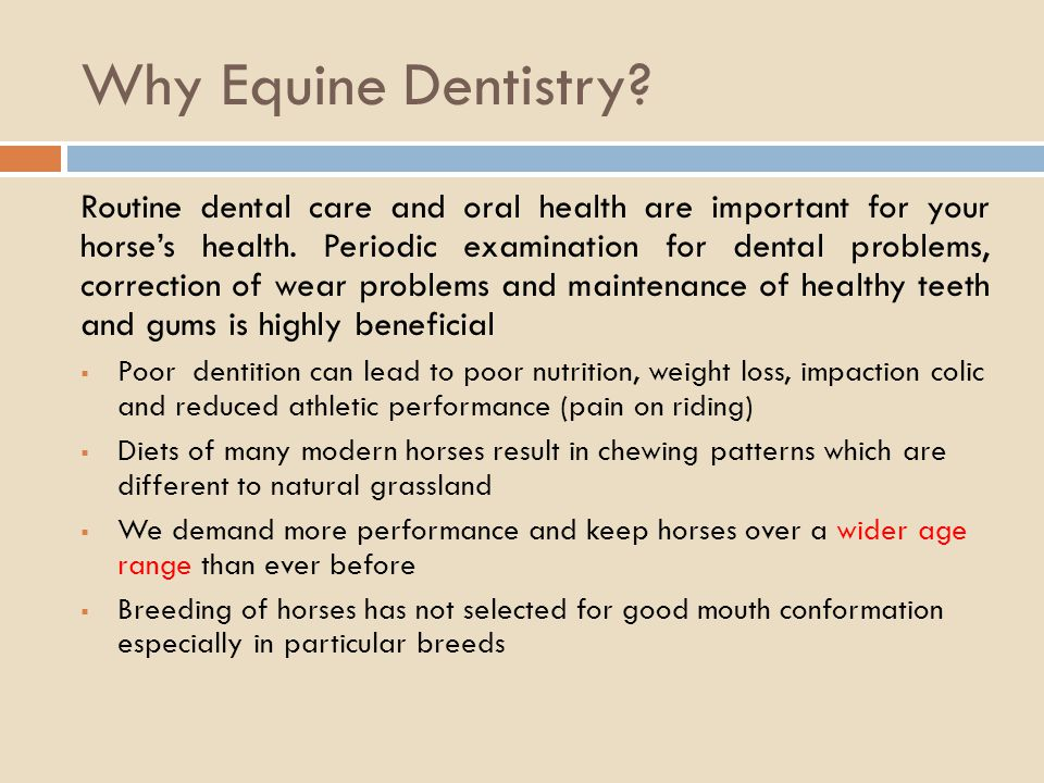Why Equine Dentistry