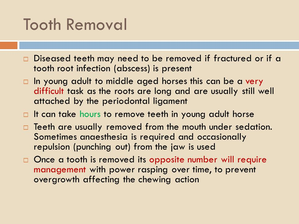 Tooth Removal Diseased teeth may need to be removed if fractured or if a tooth root infection (abscess) is present.