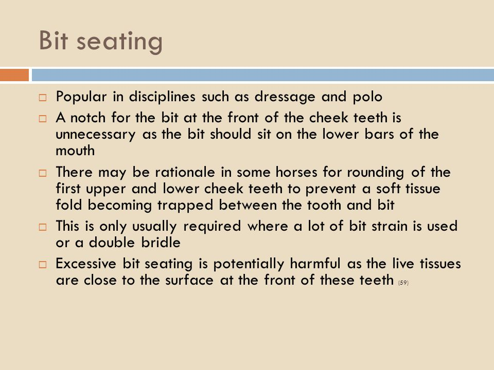 Bit seating Popular in disciplines such as dressage and polo