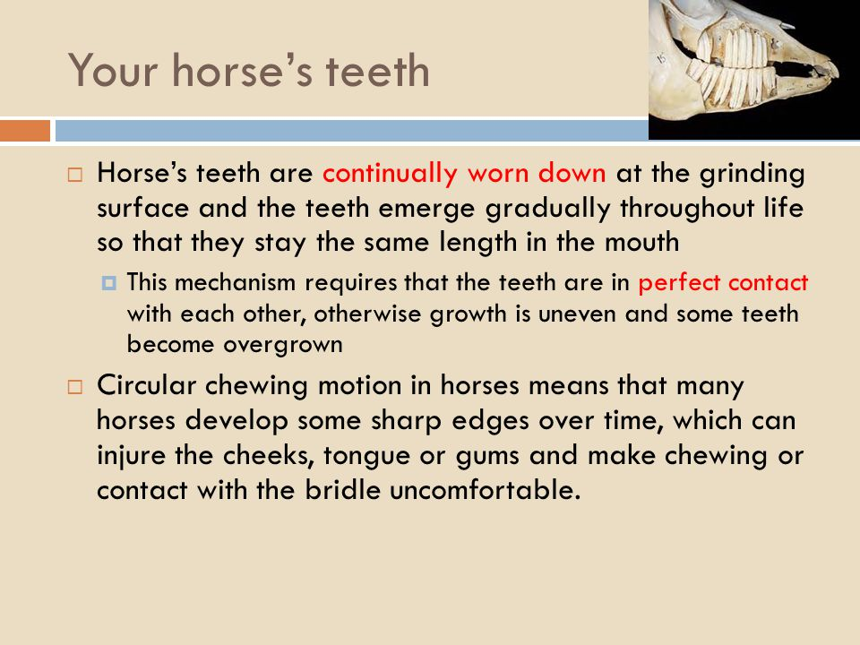 Your horse's teeth