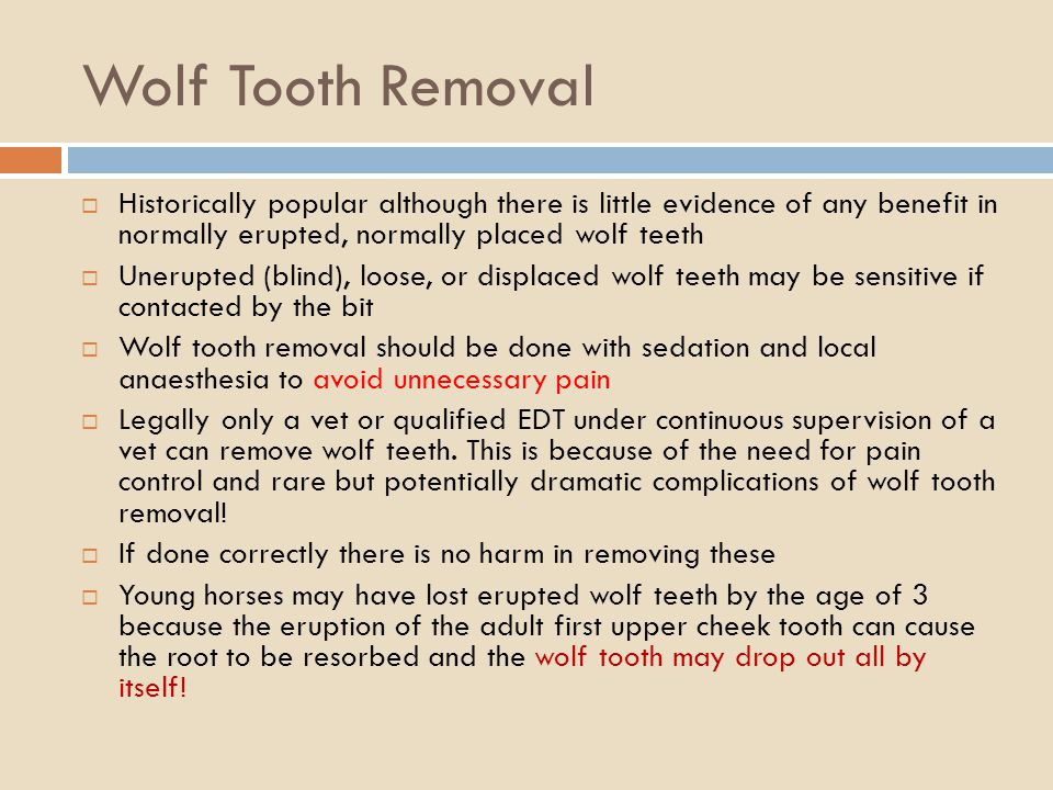 Wolf Tooth Removal Historically popular although there is little evidence of any benefit in normally erupted, normally placed wolf teeth.