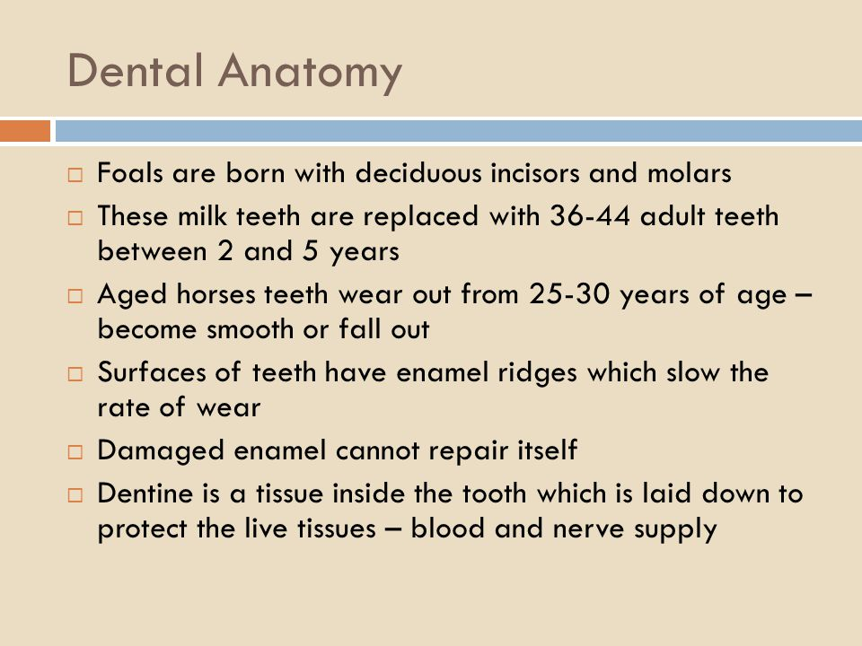 Dental Anatomy Foals are born with deciduous incisors and molars