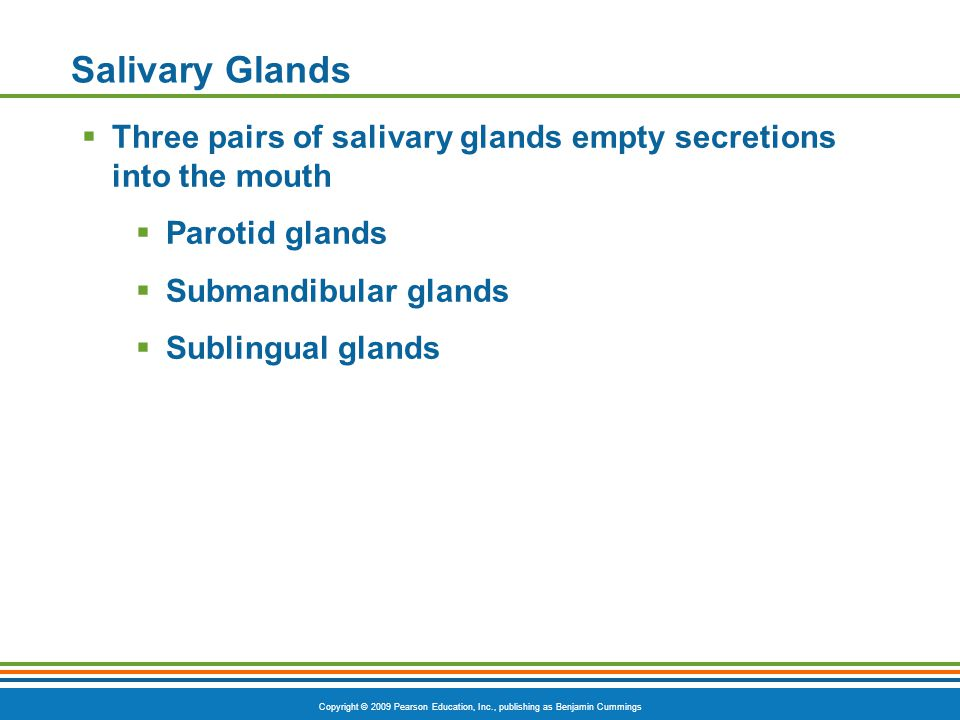 Salivary Glands Three pairs of salivary glands empty secretions into the mouth. Parotid glands. Submandibular glands.