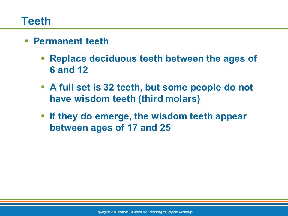 Teeth Permanent teeth. Replace deciduous teeth between the ages of 6 and 12.