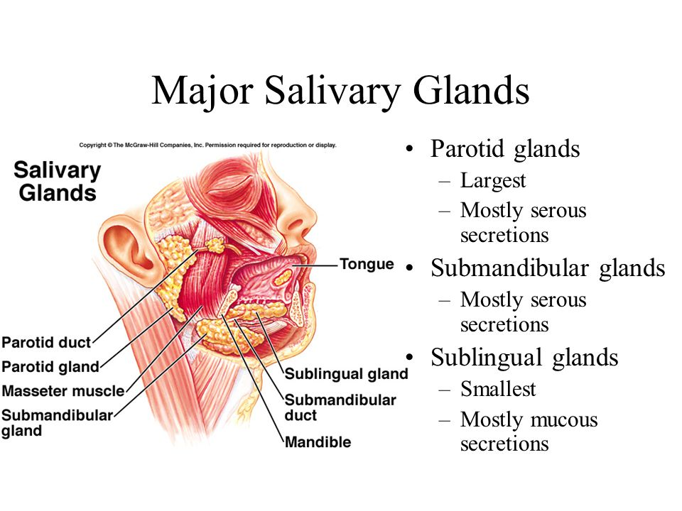 Major Salivary Glands Parotid glands Submandibular glands