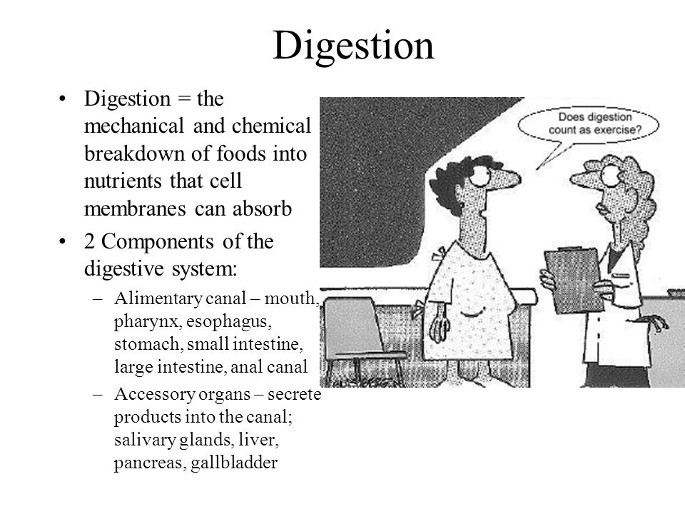 Digestion Digestion = the mechanical and chemical breakdown of foods into nutrients that cell membranes can absorb.