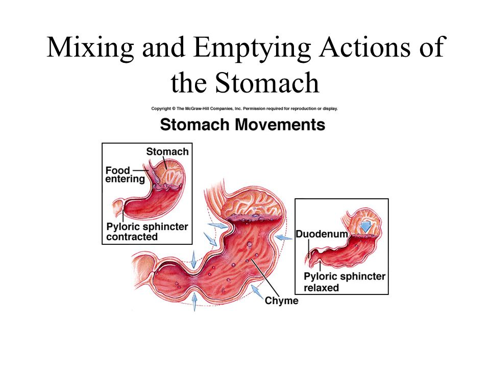 Mixing and Emptying Actions of the Stomach