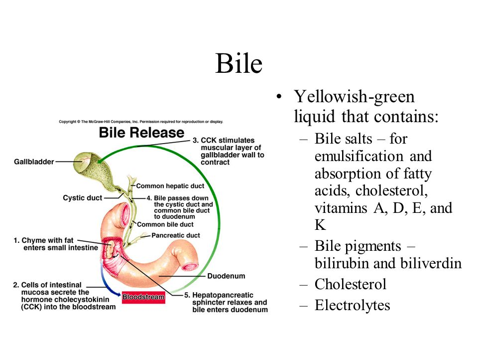 Bile Yellowish-green liquid that contains: