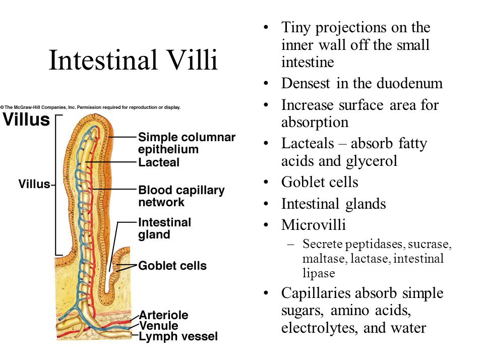 Tiny projections on the inner wall off the small intestine