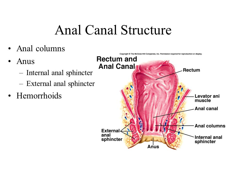 Anal Canal Structure Anal columns Anus Hemorrhoids
