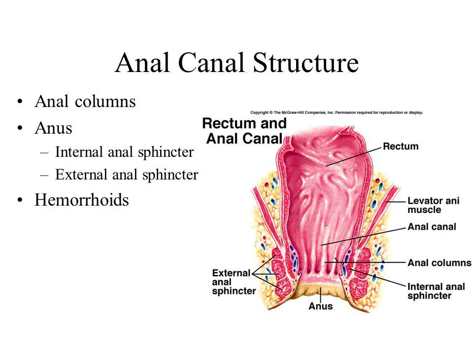 Anal Canal Structure Anal columns Anus Hemorrhoids