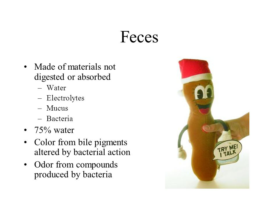 Feces Made of materials not digested or absorbed 75% water