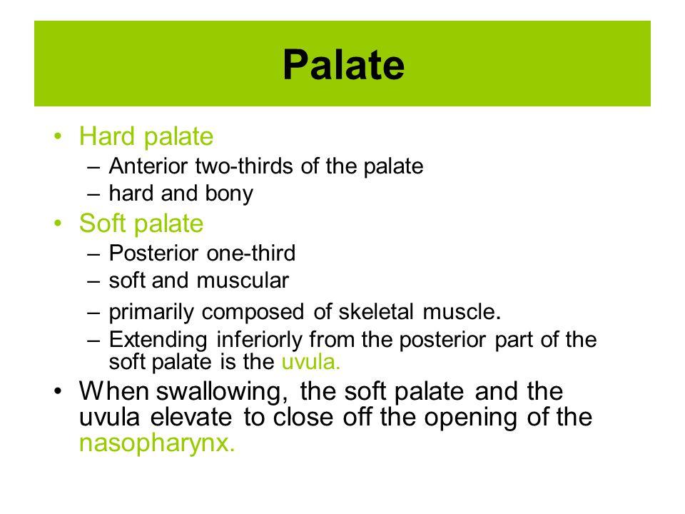 Palate Hard palate Soft palate