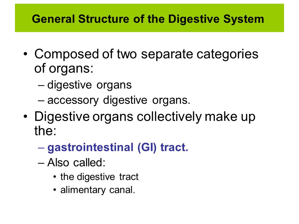 General Structure of the Digestive System