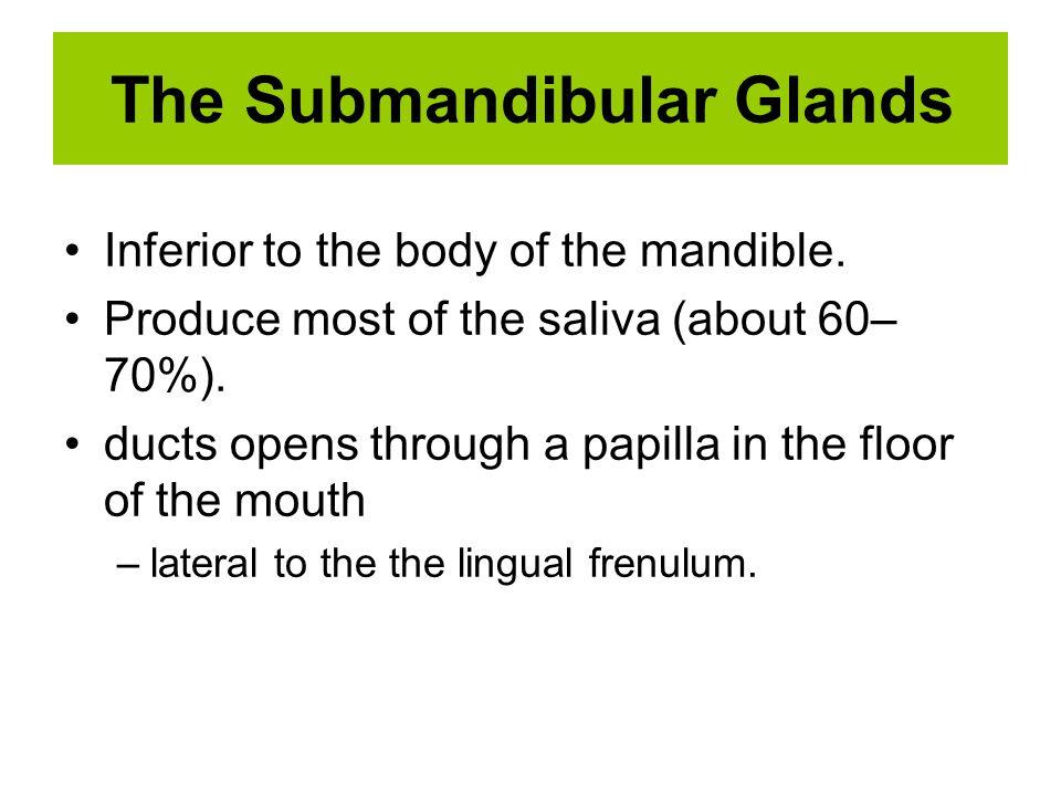 The Submandibular Glands
