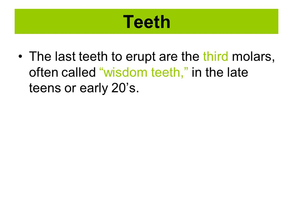 Teeth The last teeth to erupt are the third molars, often called wisdom teeth, in the late teens or early 20's.