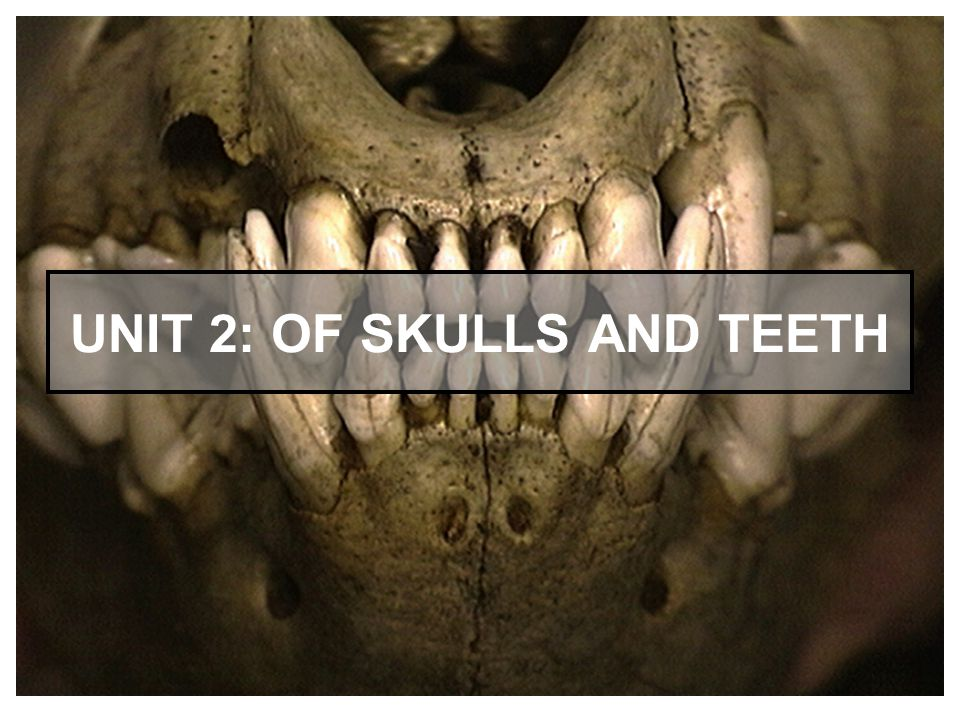Unit 2: Of Skulls and Teeth