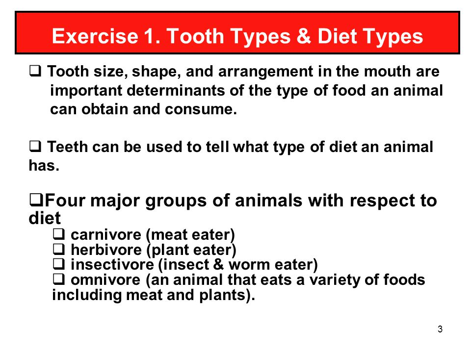 Exercise 1. Tooth Types & Diet Types