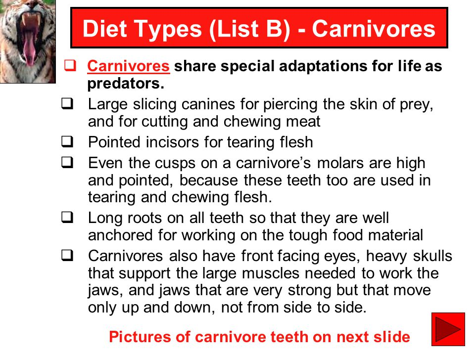 Diet Types (List B) - Carnivores