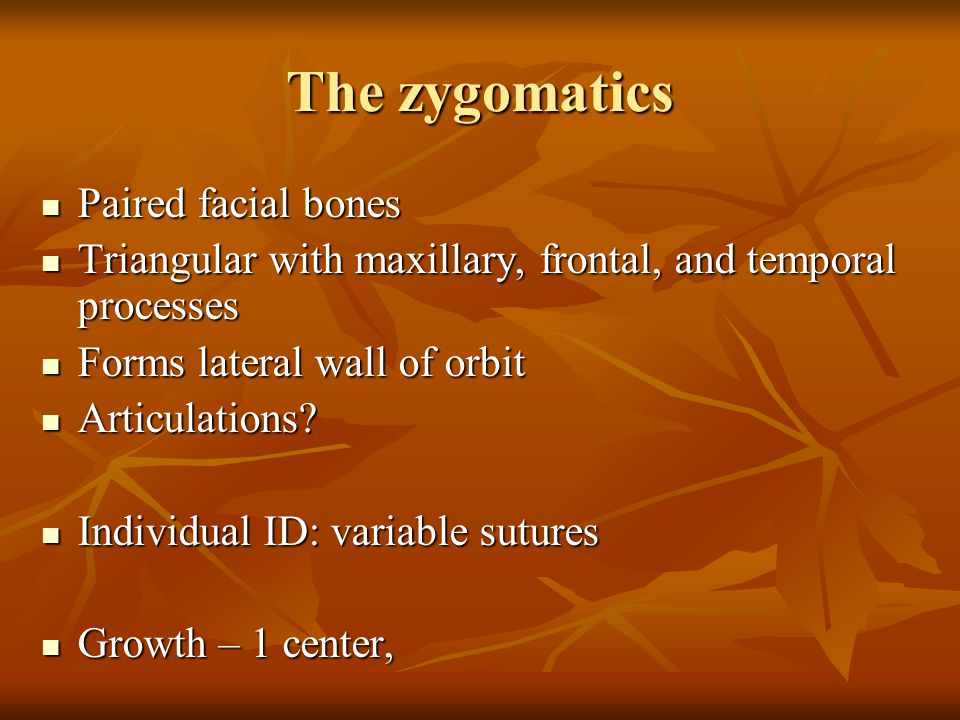 The zygomatics Paired facial bones