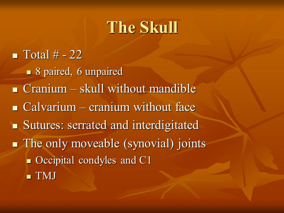 The Skull Total # - 22 Cranium – skull without mandible